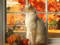 Happy November Cat