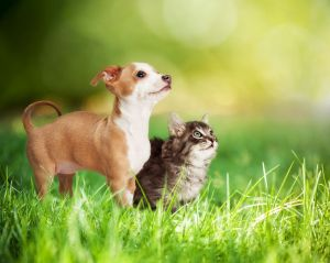 May puppy and kitten