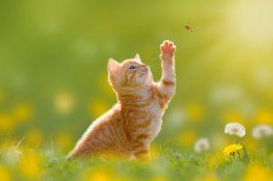 June kitten