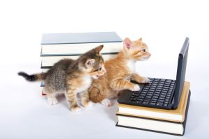July-August Kittens with computer and books
