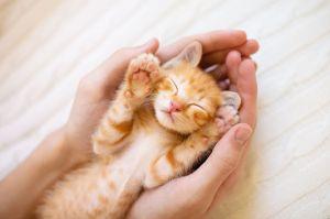 New Year Kitten