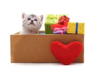February Valentine Kitty